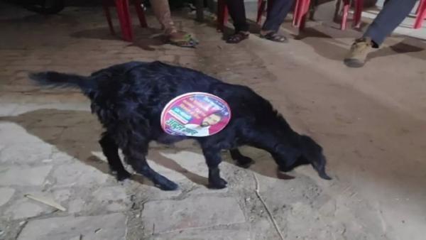 """Политики Индии взяли и закосплеили """"Три билборда"""" - но как. Их щиты живые и знают, что такое собачья жизнь"""