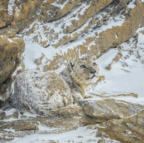 Кот превратился в камень, но это не хоррор, а эволюция. Спасибо природе за трюки, облегчающие жизнь пушистику