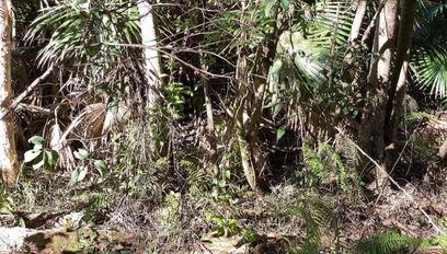 Фотография леса таит в себе опасность, но разглядеть её смогут не все. Ведь Cнейк на ней - не Солид, а круче