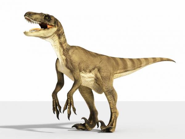 Хозяйка сняла динозавра во дворе. Глядя на бегущее нечто с короткими руками, другое объяснение не найти