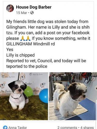 Пёс жалобно смотрел на женщину и она поняла - его украли. Но чтобы доказать, пришлось закосплеить Эйса Вентуру