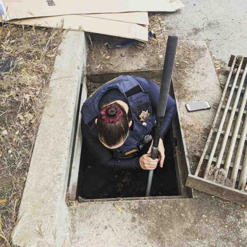"""Утята прятались в канализации, но услышав маму решили выйти. Они не подозревали, что их обмануло чужое """"Кря!"""""""