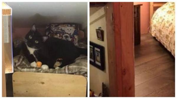 Кот живёт лучше, чем многие из нас. Чтобы это понять, хватит и одним глазом увидеть его комнату с котоплазмой