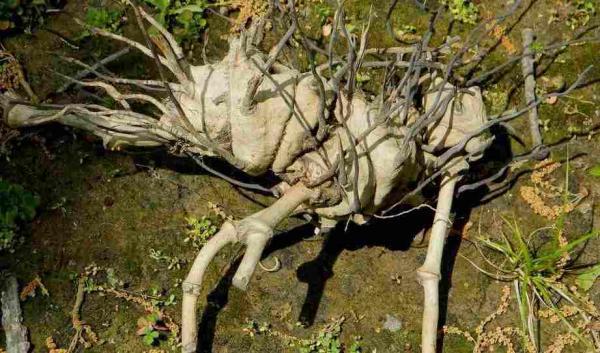 Реддитор заглянул в свой сад и открыл портал в ад. Он нашёл растение с когтями, которое заинтересовало учёных
