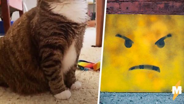 Кошку хотят забрать в семью, а по её морде и не скажешь, что она рада. Даже кот из Шрека так не умеет