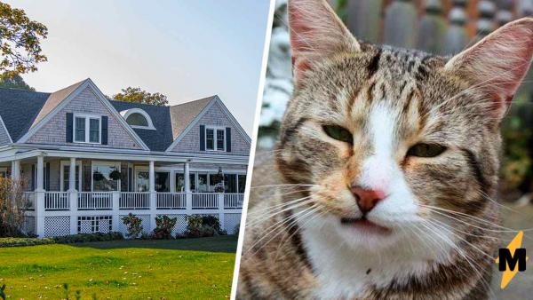 Хозяйка искала пропавшего котика, а нужно было просто перейти дорогу. 5 лет пушистый жил у неё под носом