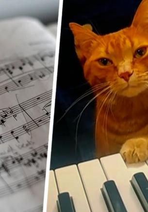 Кот играет на пианино на видео, а зрителям не терпится. Все ждут, когда Мяоцарт выпустит свой первый альбом