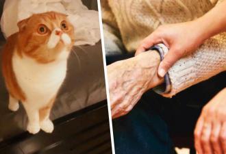 Дочь привела кота к больному папе и поверила в чудо. Поступок питомца не объяснить даже магией эволюции
