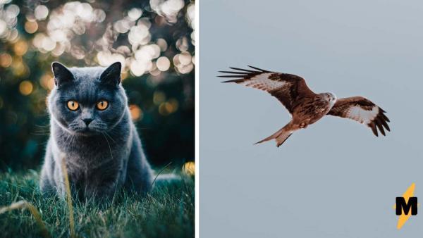 Турист сделал фото и доказал - летающие коты существуют. Это оптическая иллюзия, которую вы точно полюбите