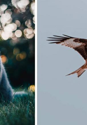 Турист сделал фото и доказал — летающие коты существуют. Это оптическая иллюзия, которую вы точно полюбите