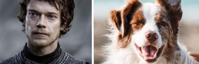 Теон Грейджой, ты зачем в собаку влез? Пёс — копия Альфи Аллена в «Игре престолов», и эту загадку не объяснить