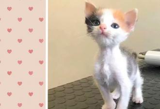 Тор не был в собаке, но попал в кота. Ветеринары не ожидали, что котёнок-скелет вырастет в самый толстый мем