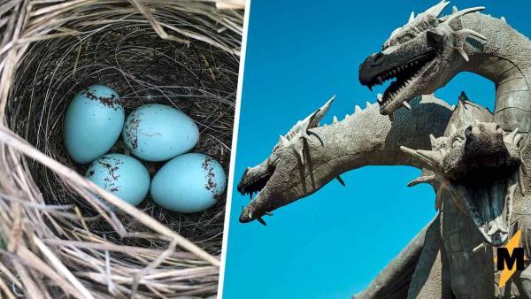 Работники парка нашли каменное яйцо и решили - дракон. Удивиться пришлось ещё раз - внутри лежали два сюрприза