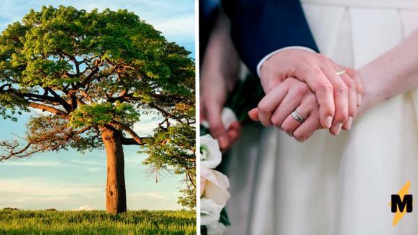 Жених увидел невесту и не смог не сделать предложение тут же. Такому денежному дереву трудно отказать