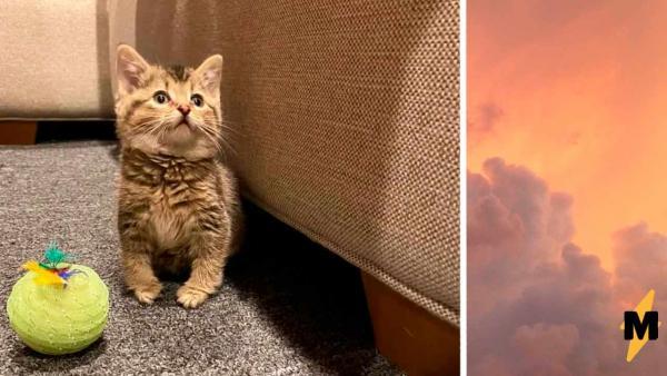 Вы знали о существовании косолапых котят? Мы тоже нет, а они есть и одним своим своим видом завоевывают сердца