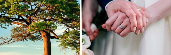 Невеста купила платье, и теперь она — денежное дерево. Жениху настолько понравилось, что он захотел так же