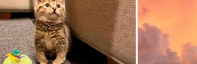 Вы знали о существовании косолапых котят? А они существуют и одним своим видом завоевывают сердца