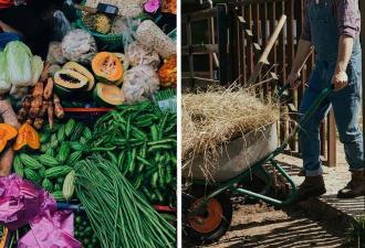 «Количество еды удивляет больше количества супруг». У фермера 7 жён, и он построил дом из пищи для них