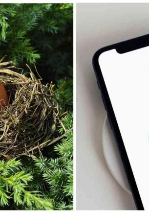 Блогерша нашла в парке и яйцо и не зря взяла его с собой. Через месяц у неё дома открылся новый район Дакбурга