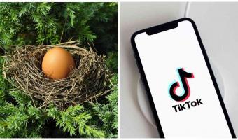 Блогерша нашла в парке яйцо и не зря взяла его с собой. Через месяц у неё дома открылся новый район Дакбурга