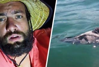 Моряк спас голубя из воды, снимая всё на видео, и озадачил зрителей. Они тоже хотят уметь плавать без рук