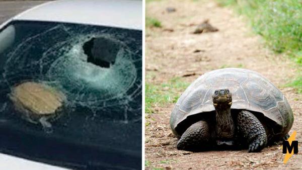 Водитель позвонила спасателям, когда её лобовое стекло пробила летающая черепаха. Сначала ей не верили, а зря