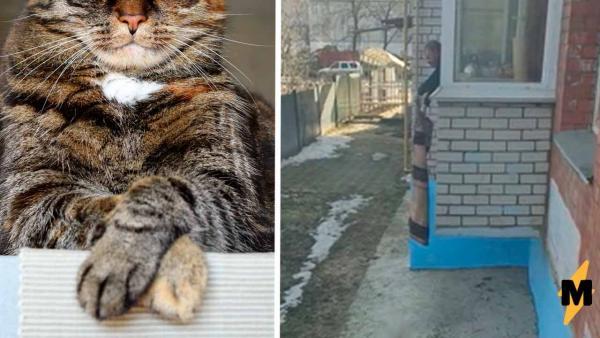 Ради своих котов хозяин готов становится Рапунцель. Достаточно увидеть, каким образом он возвращает их домой
