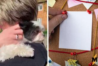 Пёс взглянул на женщину, и та поняла — его украли. Чтобы доказать это, ей пришлось закосплеить Эйса Вентуру
