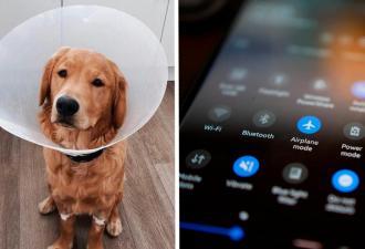 Хозяйка играла с псом и случайно сделала его киборгом. Теперь её любимые треки играют прямо в животе питомца