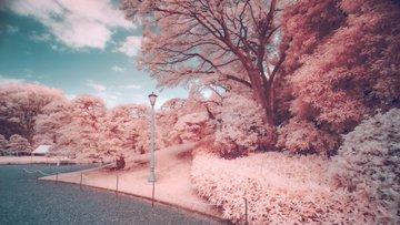 Цвет настроения — розовый. Попробуйте найти цветущую Сакуру на фото, но предупреждаем, не так-то это и просто
