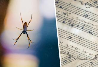 Спокойно, арахнофобы, есть шанс договориться с пауками. Ведь учёные сделали из паутины трек, чтобы понять их
