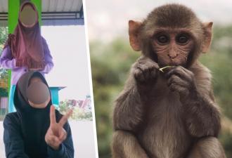 Тиктокерши снимали танец, но у обезьяны была идея получше. То, что она сделала с камерой, покорило зрителей