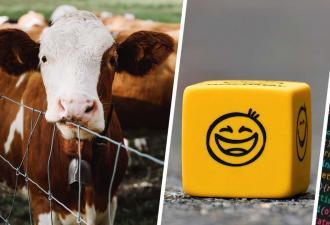Унылая корова или весёлая свинья? Учёные создали систему, распознающую эмоции зверей, а вышел шаблон для мема