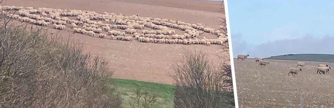 Малдер, Скалли, по коням, возможно, НЛО. Велосипедист увидел круги на поле, подошёл, а там овцы хоровод водят