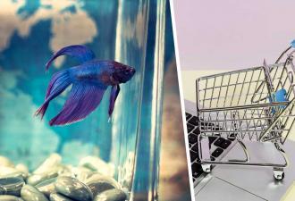 Мальчик заказал в Сети аквариумную рыбку, но в пути та подросла. Да так, что посылку пришлось отдать полиции