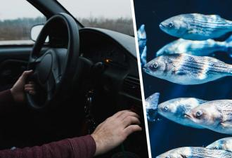 Шофёр грузовика никогда бы не поверил, что рыбы умеют летать. Хорошо, что у него есть видео — прямо с трассы