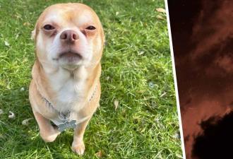 Работница приюта честно описала пса, и трюк сработал. Мальчик настолько плохой, что вы захотите его забрать