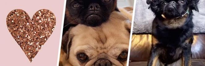 У пса Чико самая пафосная морда среди собак. Расступитесь, двуногие, вы — слуги для этого почтенного господина