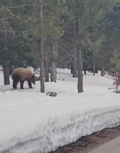 Бегун заметил сталкера, но ускоряться было бессмысленно - это был медведь. Но то, как он спасся - удивляет