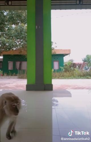 Подруги снимали танец на видео, но обезьяна всё решила за них. Так пропал телефон, но появилась звезда тиктока