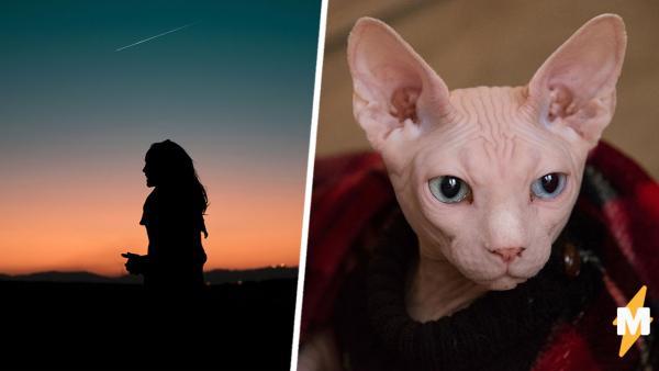 Хозяйка купила котёнка сфинкса, но пубертат его не пощадил. Теперь у кота шерсть, а у хозяйки - вопросы