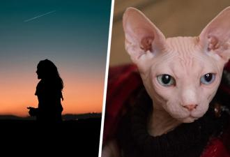 Жительница Тюмени купила котёнка сфинкса, и тот захотел себе шубу. Теперь у кота шерсть, а у хозяйки — вопросы