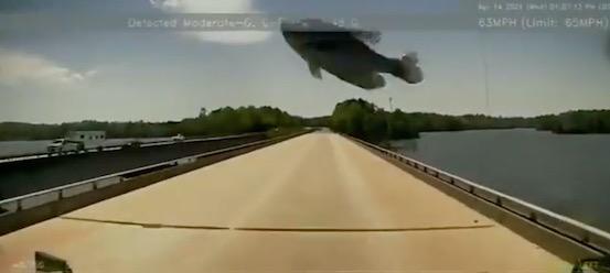 """""""Если вы за рулём - нужно быть готовым ко всему"""", уверен шофёр. И к падающим с неба настоящим рыбинам тоже"""