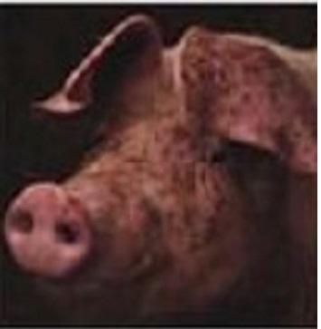 Новая разработка ученых - узнай настроение своего животного. Только система стала настоящим шаблоном для мемов