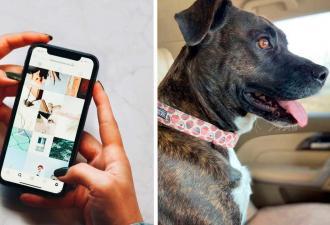 Собачница приютила пса на время, но тот пленил её взглядом. Если бы печаль была животным, она бы выглядела так