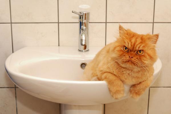Хозяин взглянул на раковину и заорал. Теперь он знает, что коты - жидкость, и эта иллюзия не для слабонервных