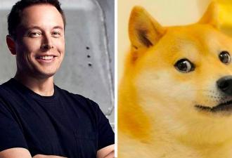 Илон Маск назвался отцом Доге, и мемы тут. Они объяснят, почему к бизнесмену не стоит обращаться без уважения