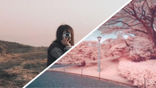 Цвет настроения — розовый. Найдите сакуру на фото пейзажей, которые не способен увидеть человеческий глаз