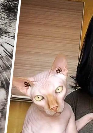 Хвостатая лизнула свою хозяйку и превратила её в женщину-кошку. Глядя на язык девушки, хочется достать линейку