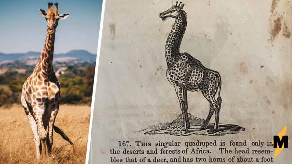 Знаете, как 200 лет назад звали жирафа? Мы тоже нет, пока реддитор не опубликовал страницу из старой книги